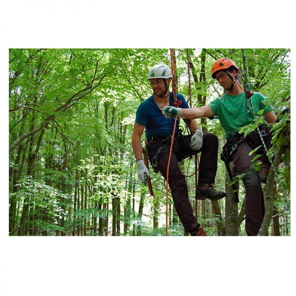 Arbres & Partenaires Soins aux arbres Yverdon-les-Bains - VD 1400
